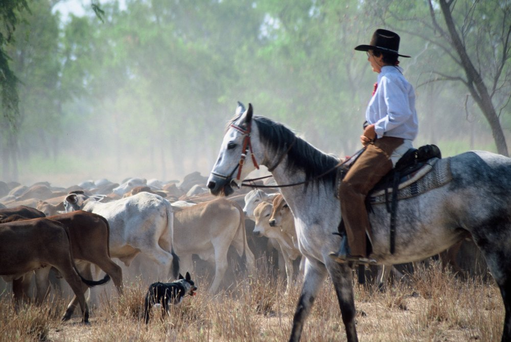 Mustering-acknowledgement to Savannah Way Ltd.jpg