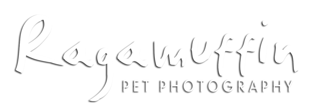 Ragamuffin Pet Photography