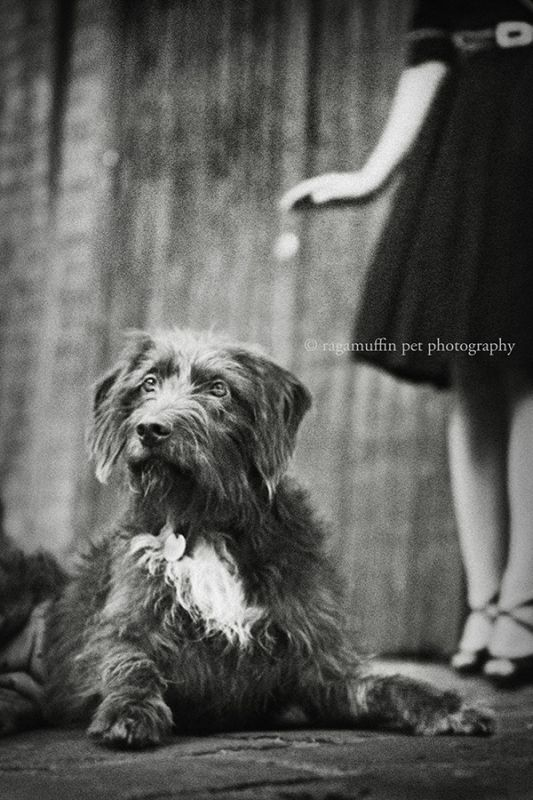 Pet Portraiture in Melbourne