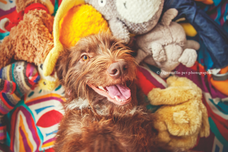 Happy Dog by Melbourne Pet Photographer