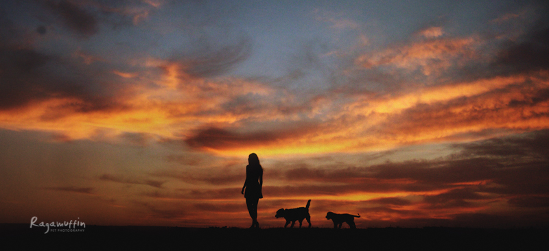 dog and girl at sunset