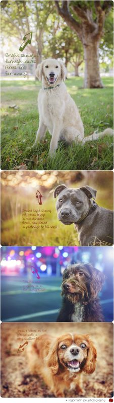 How to create bokeh in professional pet photography