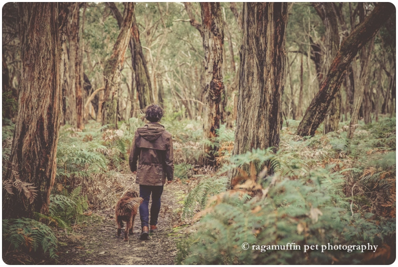 Bushwalking with dog in Otways