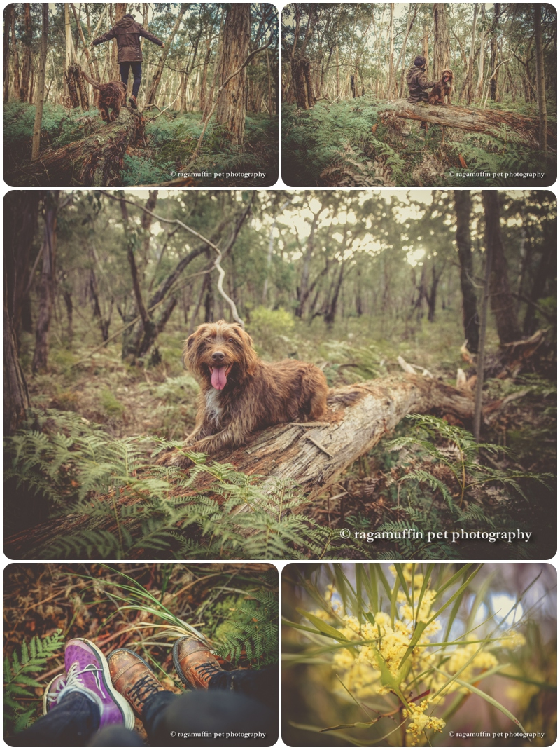 Melbourne Pet Photography in Bush