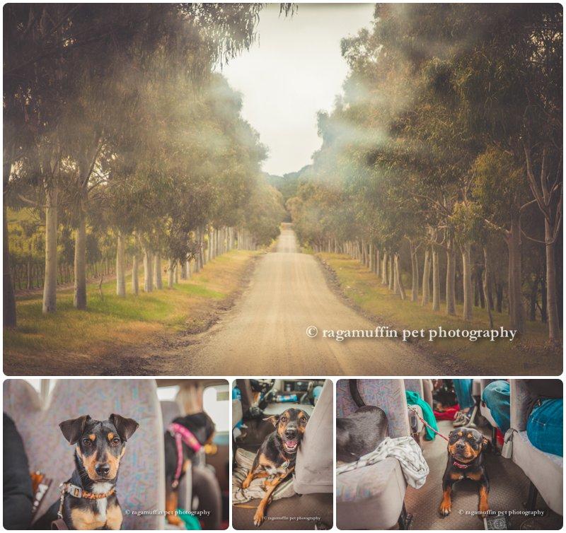 www.ragamuffinpetphotography.com.au