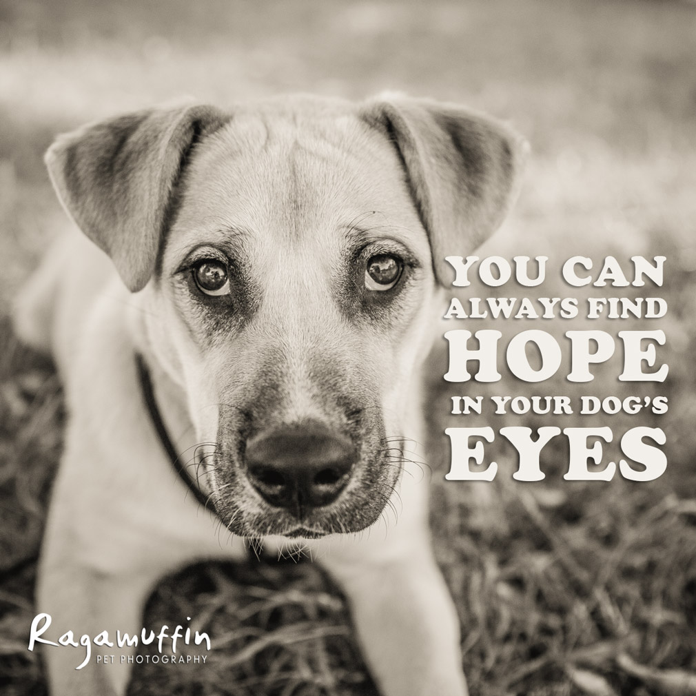 dog-quote-hope-eyes