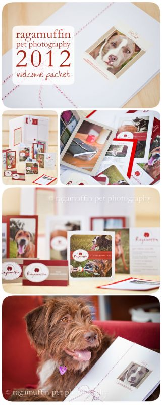 Ragamuffin Pet Photography Welcome Packet