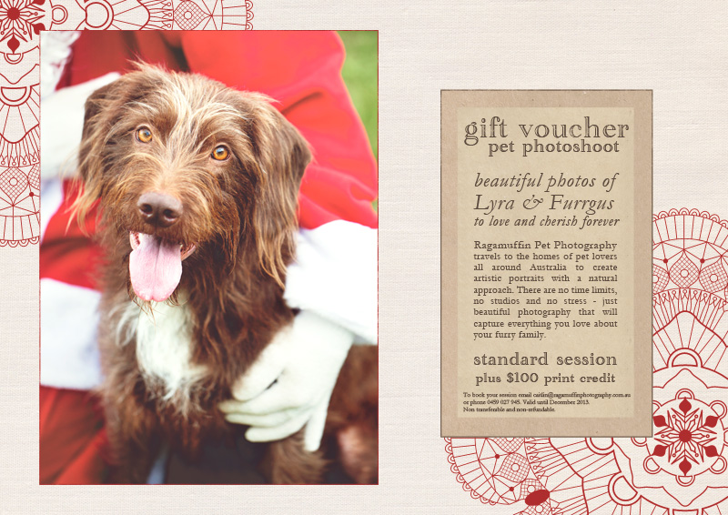 Christmas Gift Voucher for Professional Pet Photography in Melbourne