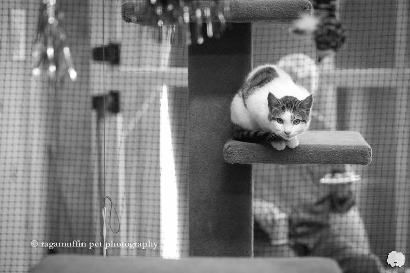 Melbourne Cat Photography