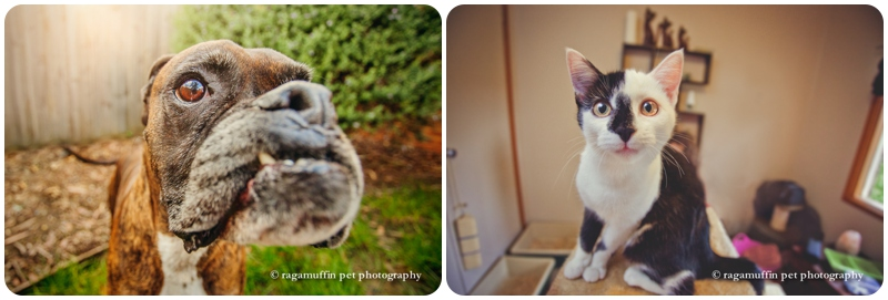 Using a wide angle lens to exaggerate perspective in pet photography