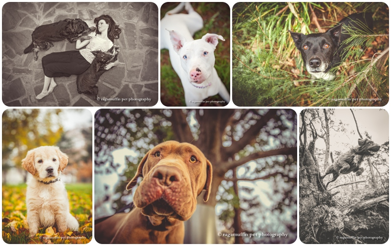 Experiment with angles in your pet photography