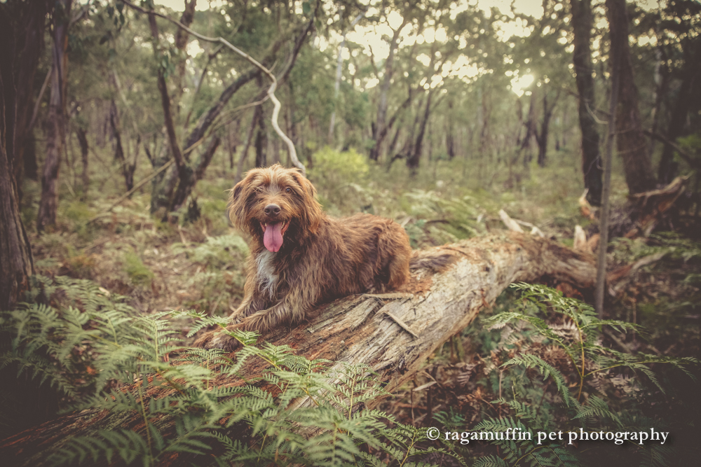 Countrywide Cottages and Ragamuffin Pet Photography