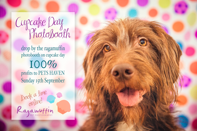 Pet photography fundraiser