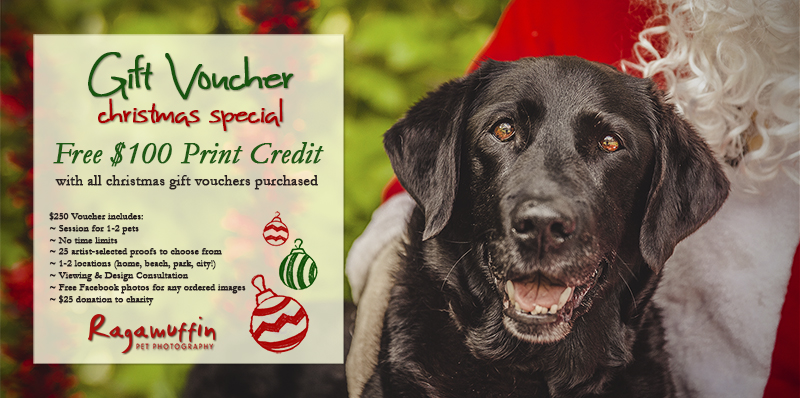 Pet Photography Gift Voucher