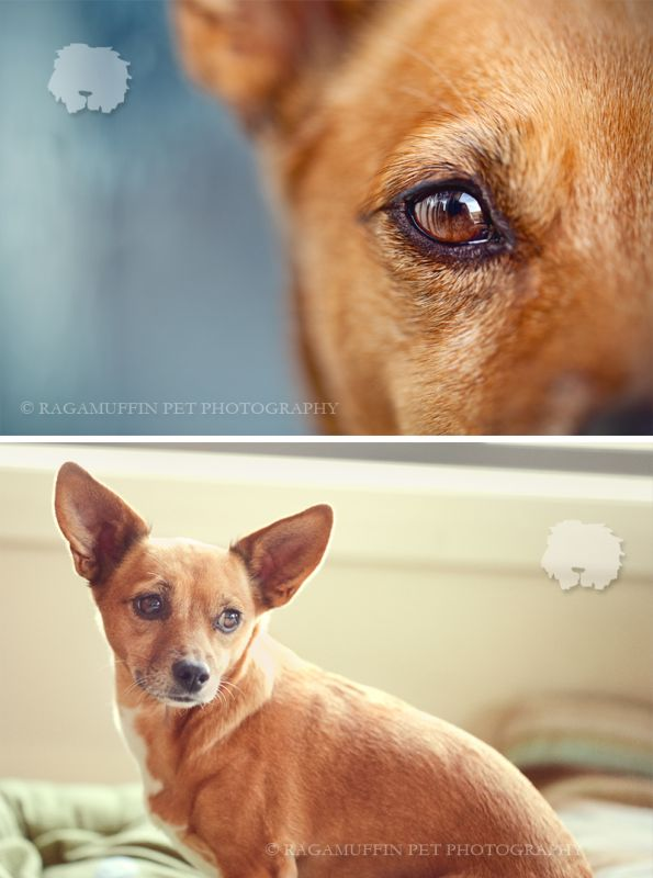 Chad & Ren - Ragamuffin Pet Photography