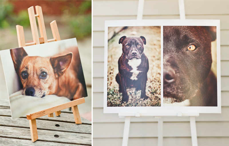 Ragamuffin Pet Photography Prints