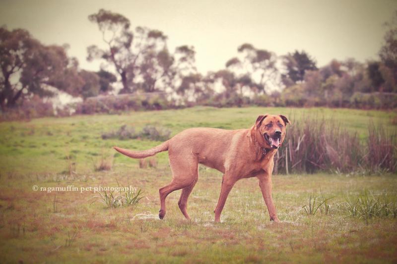 Mornington Peninsula Pet Photography