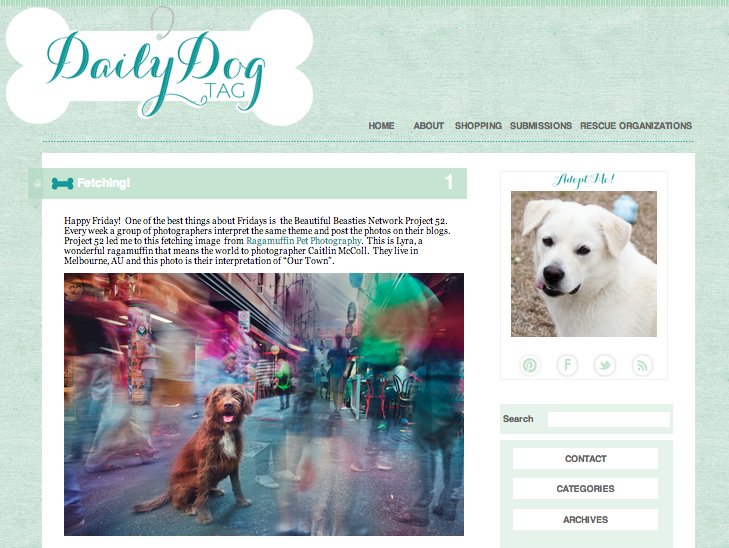 Dog Photographer in Australia featured on the Daily Dog Tag