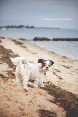 Melbourne Pet Photography