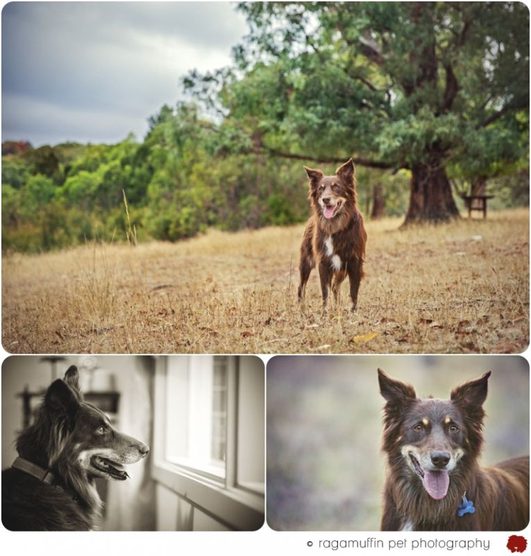 Pet Photographer Melbourne