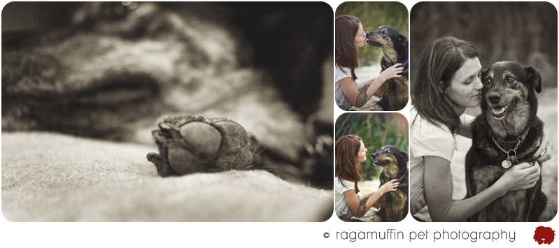 Dog Photographer Australia