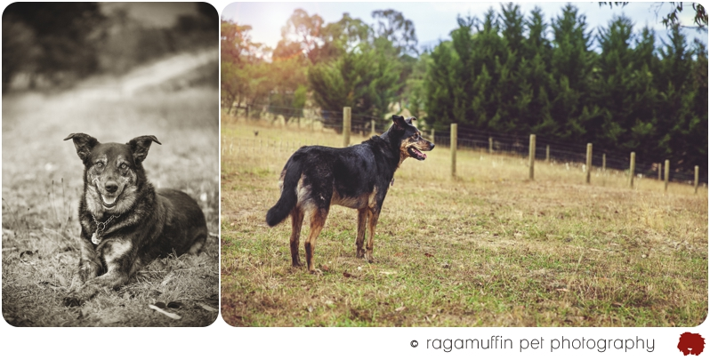 Australian Pet Photographer