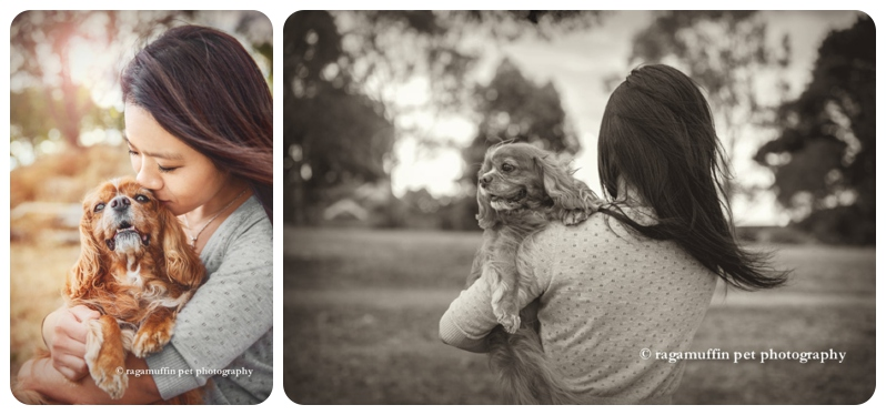 Cavalier King Charles Spaniel in the arms of his owner in Melbourne