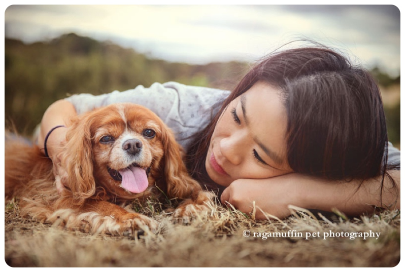 Chico the cavvie cuddling his Mum during our pet photography session in Templestowe