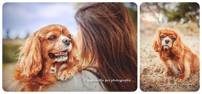 templestowe pet photographer