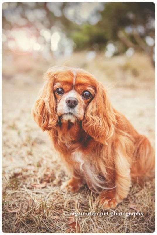 Pet Photographer Templestowe
