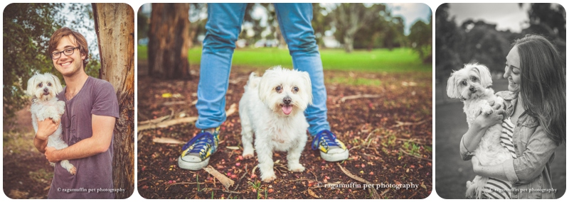 Alfie the Maltese dog photographed with his owners