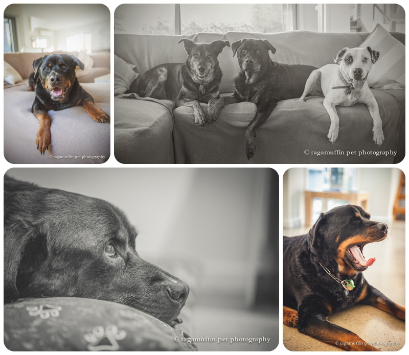 Dog Photography in a Beach house on the Mornington Peninsula/Inverloch