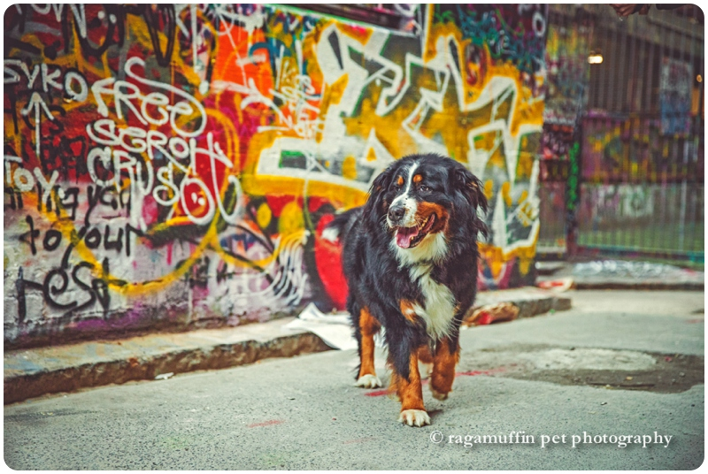 Dog Photography with Melbourne Graffiti