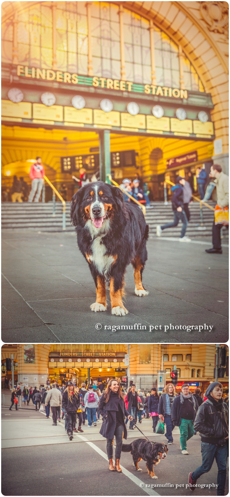 Dog at Flinders Street Station, Melbourne