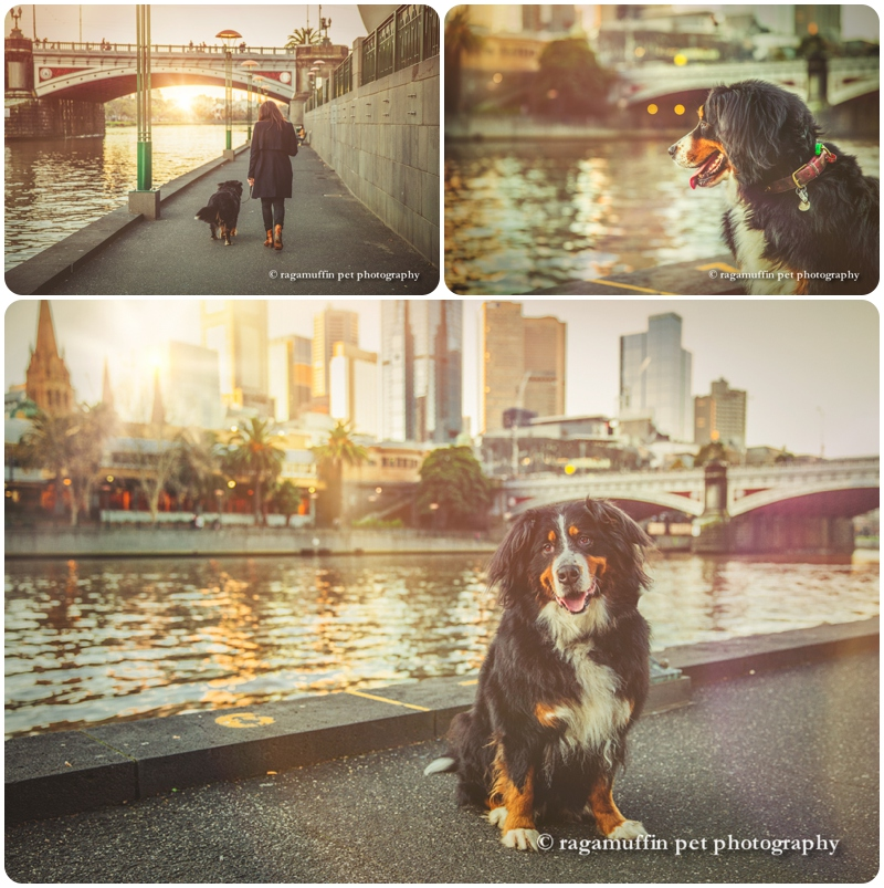 Dog by the Yarra River, Southbank with Melbourne skyline in the background
