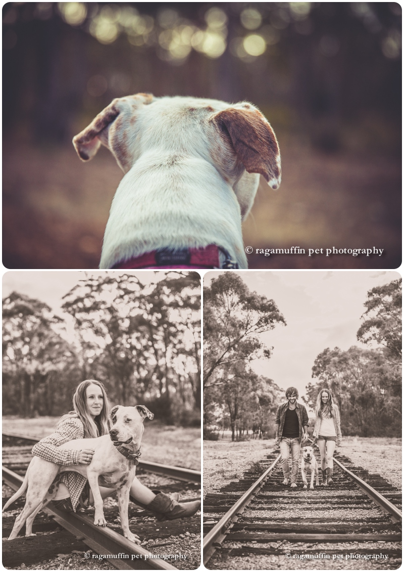 castlemaine-dog-photography_0006