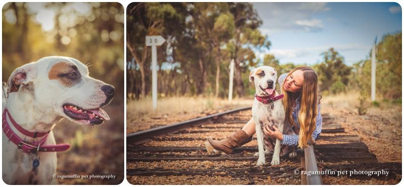 Castlemaine Dog Photography ~ Happy Gotcha Day Frankie
