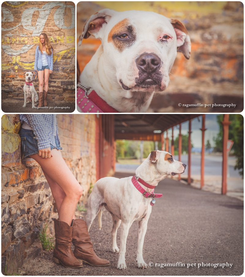 castlemaine-dog-photography_0011