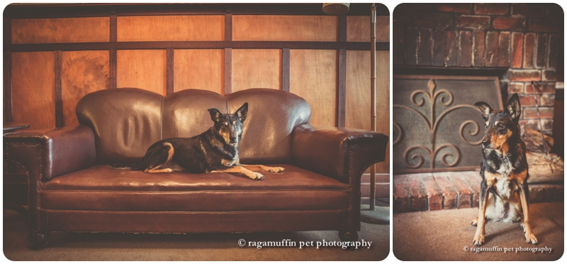 Traditional Dog Photographer