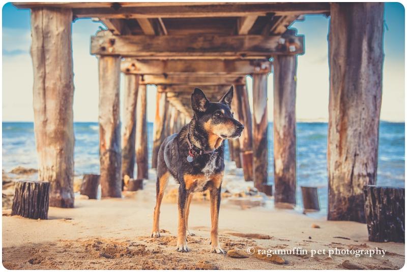 Dog Under Pier Photograph