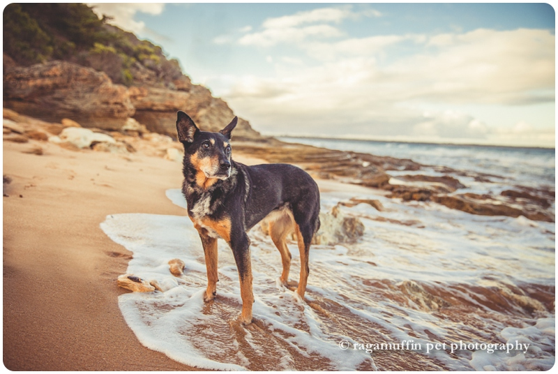 Great Ocean Road Dog Photo