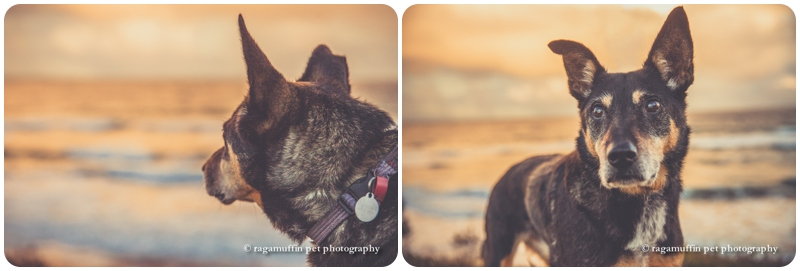 Torquay Beach Pet Photography