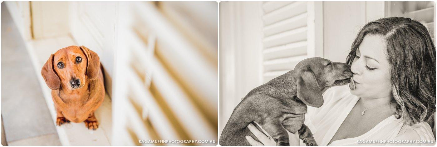 Dachshund Puppy Melbourne