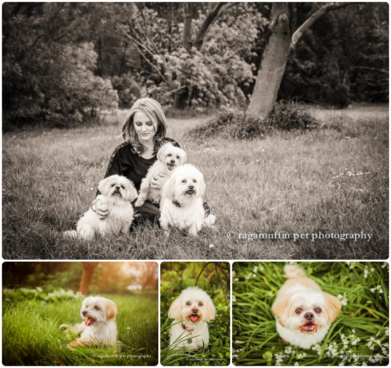 Candid photographs of woman with her white dogs in templestowe