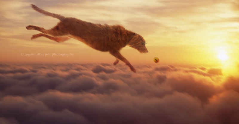 Dog Flying in Sky