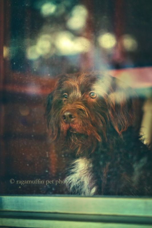 Photo of Dog in Window in Melbourne