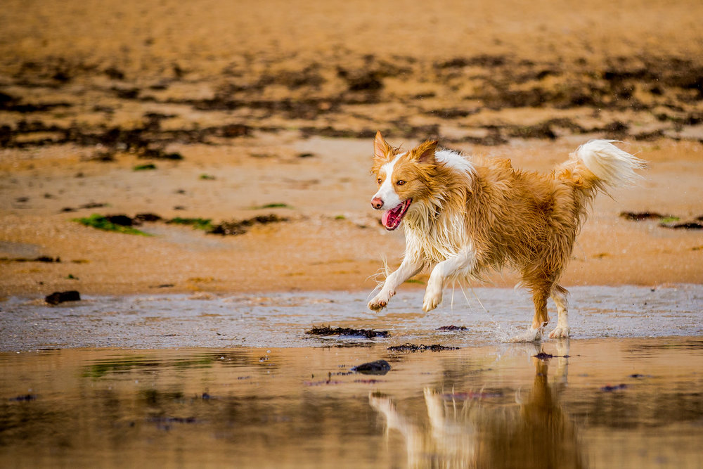 coby-sadie-ragamuffin-August_15(95)-web.jpg