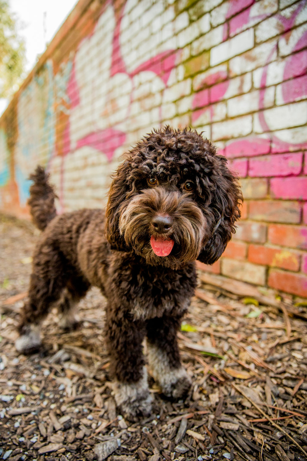 Lilo-ragamuffin-July_16(43)-edit-web.jpg