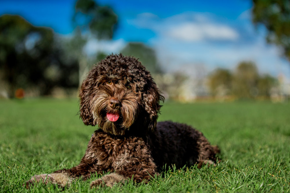 Lilo-ragamuffin-July_16(62)-edit-web.jpg