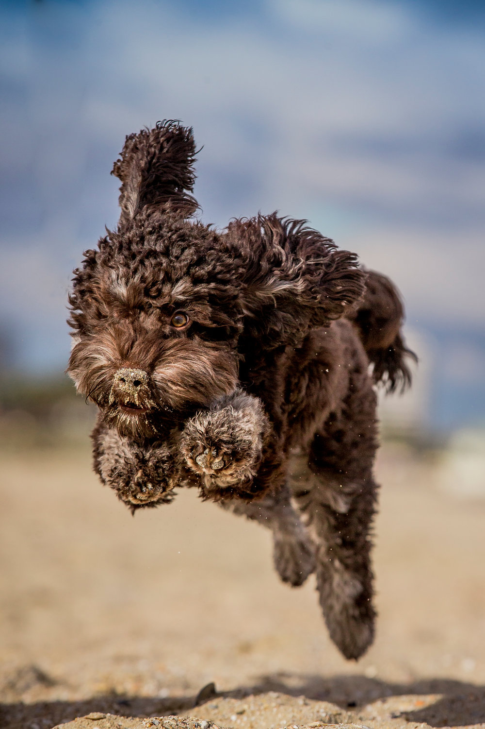 Lilo-ragamuffin-July_16(93)-edit-web.jpg